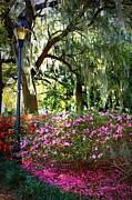 Forsyth Park Photos - Sunshine through Savannah Park Trees by Carol Groenen