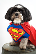 Small Dog Prints - Super Hero Print by Kim Fearheiley