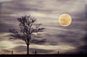 Supermoon Photos - Super Moon by Darren Fisher