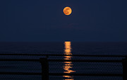 Supermoon Photos - Super Moon Rising by Charline Xia