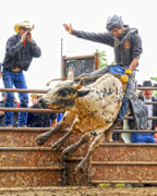 Bull Riding Prints - Support from the Sidelines Print by Ron  McGinnis