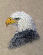 Yellow Beak Drawings - Supremacy by Phyllis Howard