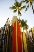 Longboard Photo Framed Prints - Surfboards At Waikiki Framed Print by Dana Edmunds - Printscapes