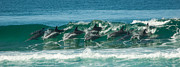 Action Art - Surfing Dolphins 4 by Alistair Lyne