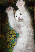 Cute Cat Photo Posters - Surprise Poster by Garry Gay