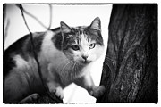 Kitty Cat Photo Prints - Surprise Kitty Print by John Rizzuto