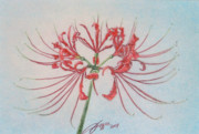 Surprise Drawings Prints - Surprise Lily Print by Beverly Fuqua