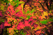 Fall Colors Autumn Colors Posters - Surreal Autumn Mix Poster by Bob Mintie
