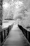 Surreal Infrared Dreamy Landscape Prints - Surreal Black White Infrared Bridge Walk Print by Kathy Fornal