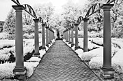 Surreal Infrared Dreamy Landscape Prints - Surreal Cranbrook Estates - Michigan Garden Print by Kathy Fornal