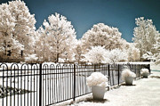 Surreal Infrared Dreamy Landscape Prints - Surreal Dreamy Color Infrared Nature and Fence  Print by Kathy Fornal