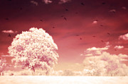 Crows In Trees Posters - Surreal Fantasy Dreamy Infrared Nature Landscape Poster by Kathy Fornal