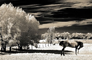 Surreal Infrared Sepia Nature Framed Prints - Surreal Fantasy Horse Landscape Framed Print by Kathy Fornal