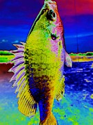Bluegill Digital Art - Surreal Fish Dream by Beth Akerman