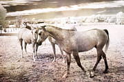 Surreal Infrared Sepia Nature Prints - Surreal Horses Dreamy Infrared Landscape Print by Kathy Fornal