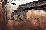 Photos Of Birds Posters - Surreal Old Barn Scene With Ravens Poster by Kathy Fornal