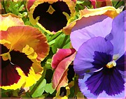 Gardening Photography Digital Art Posters - Surreal Pansies Poster by Mindy Newman