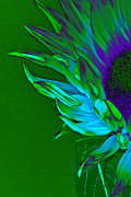 Surreal Sunflower  Print by Karen Lewis