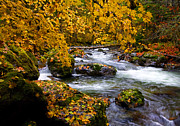 Flow Framed Prints - Surrounded by Autumn Framed Print by Mike  Dawson