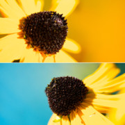 Diptych Photos - Susans by Lisa Knechtel