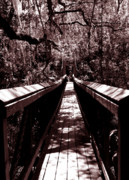 Palatka Bridge Prints - Suspension Bridge Print by Bob Johnson