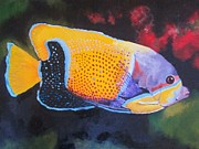 Majestic Angelfish Paintings - Sutton Fish by Terry Gill