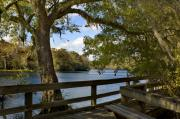 Dixie Framed Prints - Suwannee River Boardwalk Framed Print by Stacey Lynn Payne