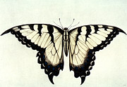 Swallow Posters - Swallow-tail Butterfly Poster by Granger