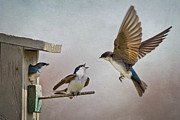 Swallow Photo Metal Prints - Swallows At Birdhouse Metal Print by Betty Wiley
