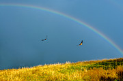 Swallows Under A Rainbow Print by Thomas R Fletcher