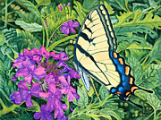 Verbena Paintings - Swallowtail and Verbena by Rainelle Meridith