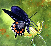 Art That Pops Framed Prints - Swallowtail Butterfly Framed Print by Donna Wiegand