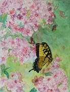 Phlox Painting Framed Prints - Swallowtail Framed Print by Holly Banks