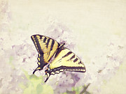 Cindy Garber Iverson - Swallowtail on lilac