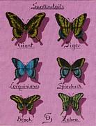 Dumitru Sandru - Swallowtails