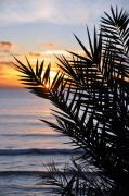 Beach Photograph Framed Prints - Swamis Palm Framed Print by Kelly Wade
