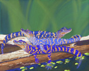 Animal Pastels Posters - Swamp Babies Poster by Tracy L Teeter
