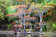 Big Cypress Bayou Photos - Swamp Dance by Lana Trussell