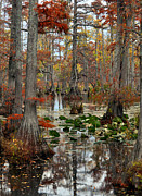 Marty Koch Art - Swamp In Fall by Marty Koch