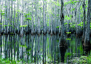 Alligator Bayou Photos - Swamp in Louisiana by Ester  Rogers