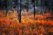 New England Fall Photos Prints - Swamp Music Print by Thomas Schoeller