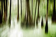 Swamp Print by Scott Pellegrin