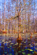 Tree Reflections In Water Framed Prints - Swamp Tree Framed Print by Susanne Van Hulst