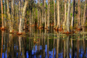 Tree Reflections In Water Prints - Swamp Trees Print by Susanne Van Hulst