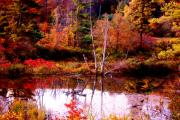 Fall Scenes Photos - Swamped Birch by Emily Stauring