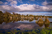 Swampland Metal Prints - Swampland Reflections Metal Print by Heather Thorning