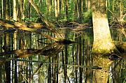 Ohio Photo Originals - Swamps are Beautiful Too by Amanda Kiplinger