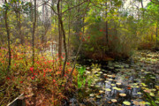 The Swamp Prints - Swamps in SC Print by Susanne Van Hulst