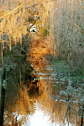 Swamps Winter Print by Kathy Gibbons