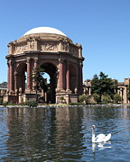Palace Of Fine Arts Prints - Swan at The San Francisco Palace of Fine Arts - 5D18064 Print by Wingsdomain Art and Photography
